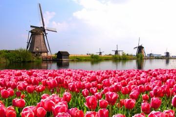 Steden Met High Wine In Nederland